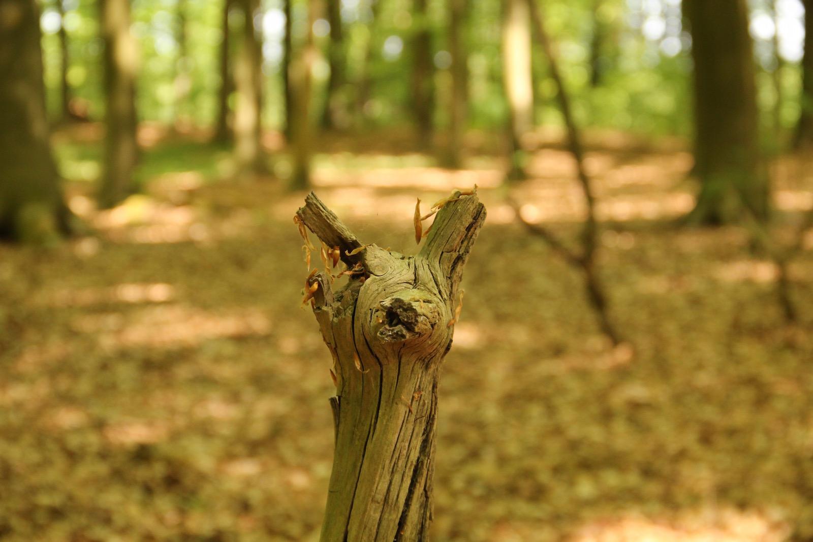 Baumstamm, der einem Reh gleicht