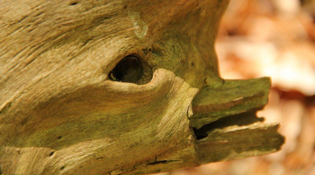 Totholz, das wie ein Delfinvogel aussieht