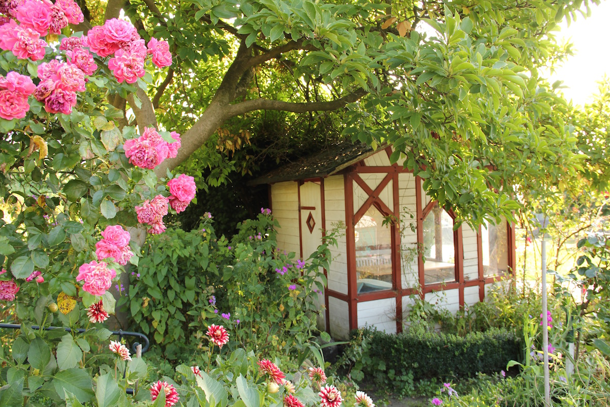 Eine Gartenlaube unter einer Magnolie