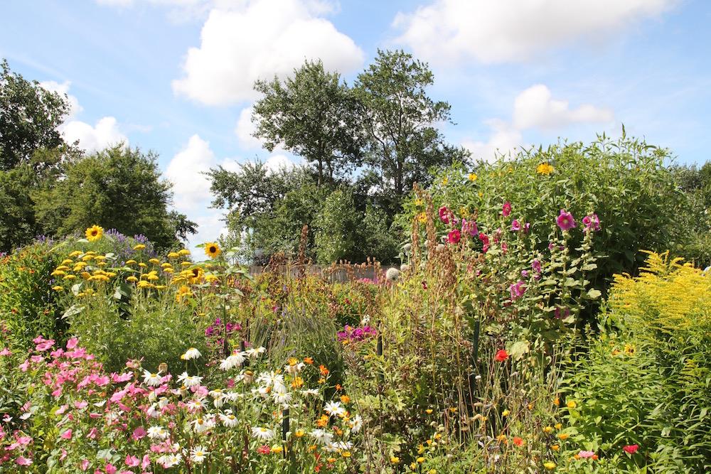 Sommerblumen im Nolde-Garten
