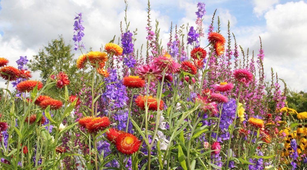 Bunte Blumen vor Sommerhimmel