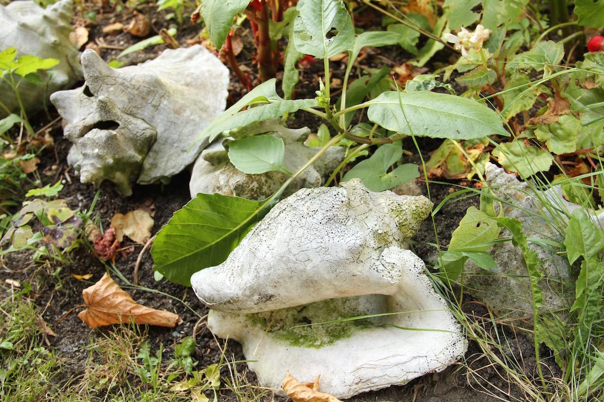 Südseemuscheln als Gartendeko