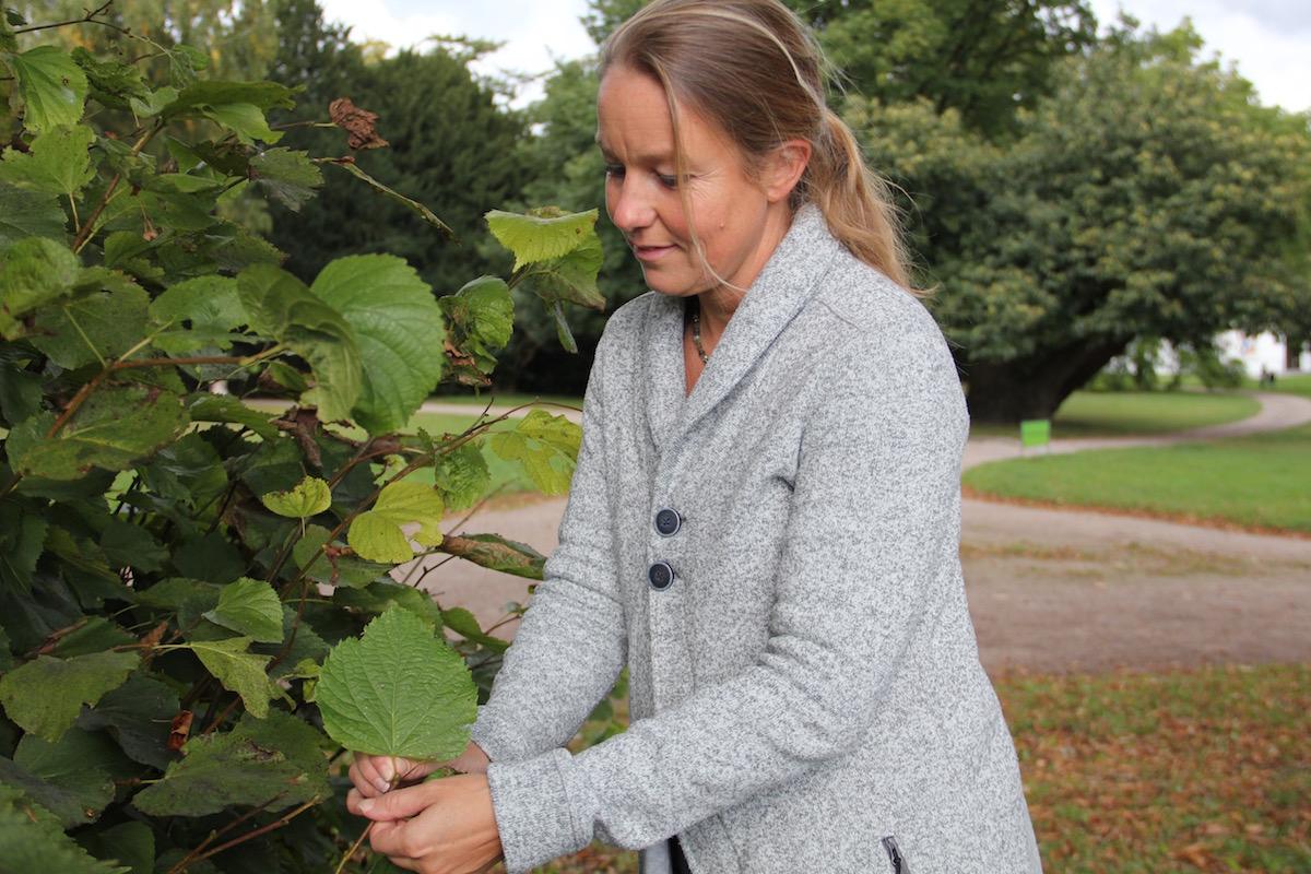 Daniela Wolff zeigt die herzförmigen Blätter der Linde