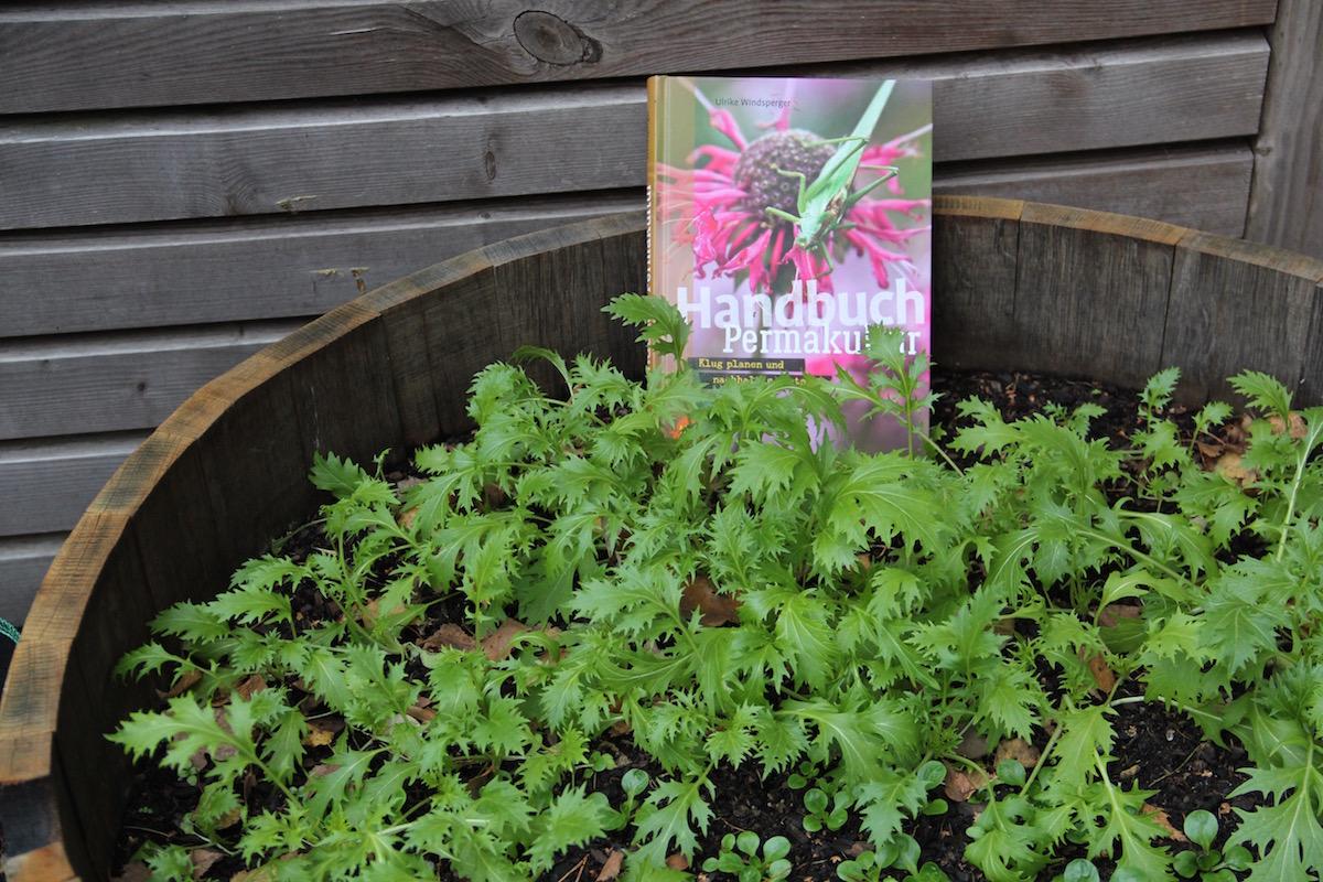 Handbuch Permakultur in einem mit Wildsalat bepflanzten Hochbeet