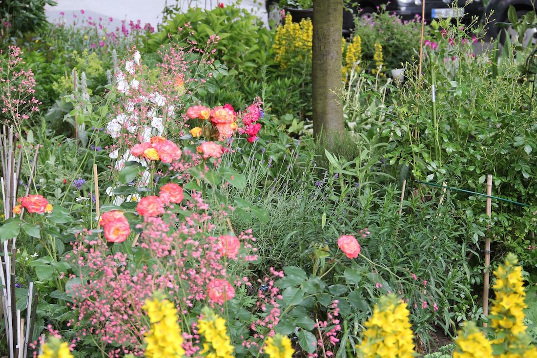 viele blühenden Blumen im Moni-Park