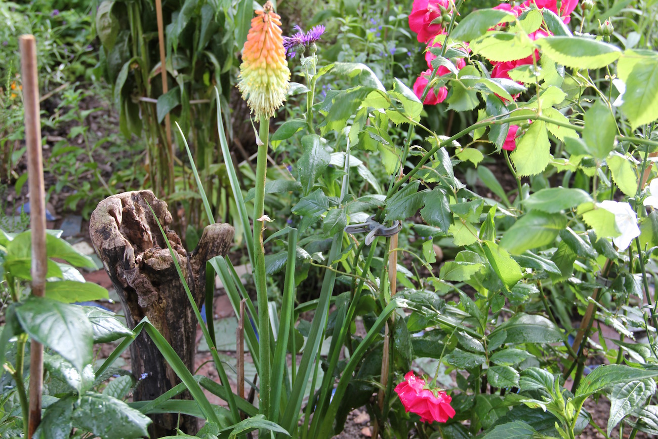 Treibholz, eine exotisch anmutende Pflanze und ein Weg aus Fliesenbruch