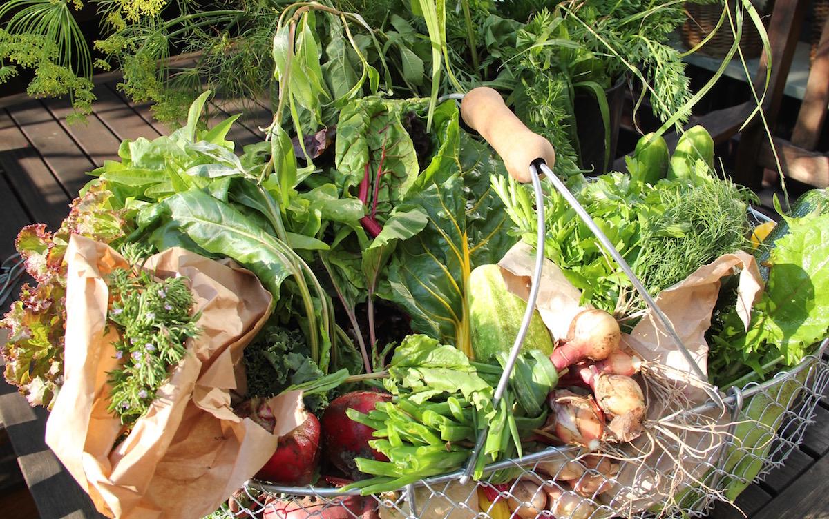 Erntekorb prallvoll gefüllt mit Salaten, Mangold und Zwiebeln