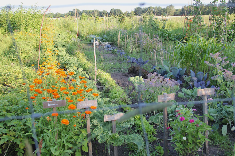 Gemüse und Blumen in Reihen