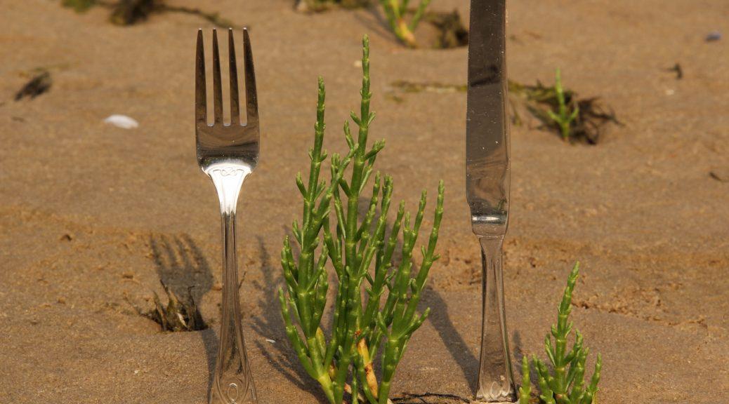 eine Quellerpflanze im Sandboden, links und recht daneben Messer und Gabel