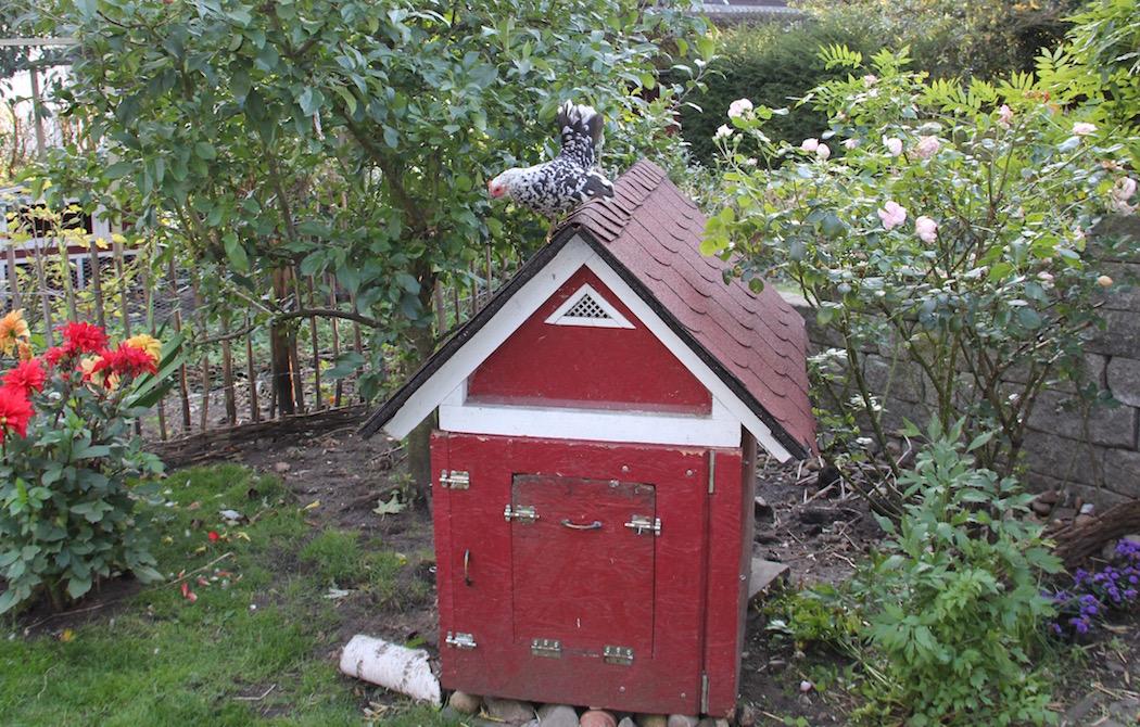 Rot-weißes Hühnerhäuschen im Garten