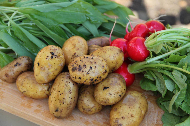 Bärlauch, Kartoffeln, Radieschen