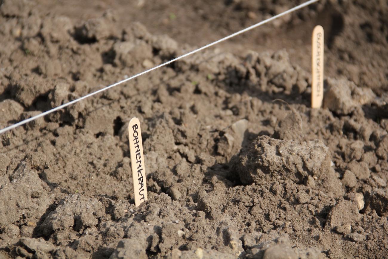 Beschriftete Holzstäbchen, die der Orientierung auf dem Acker dienen