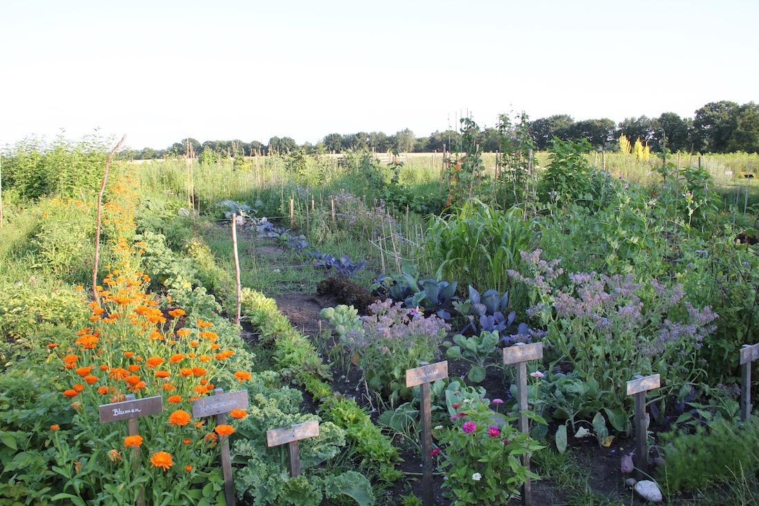 der Acker im Sommer, voller Gemüse und Blumen