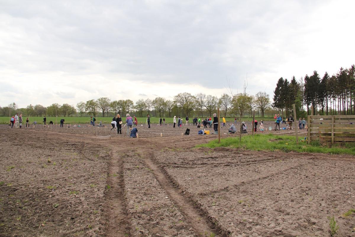 das Feld im Überblick mit vielen Gärtnern bei der Arbeit