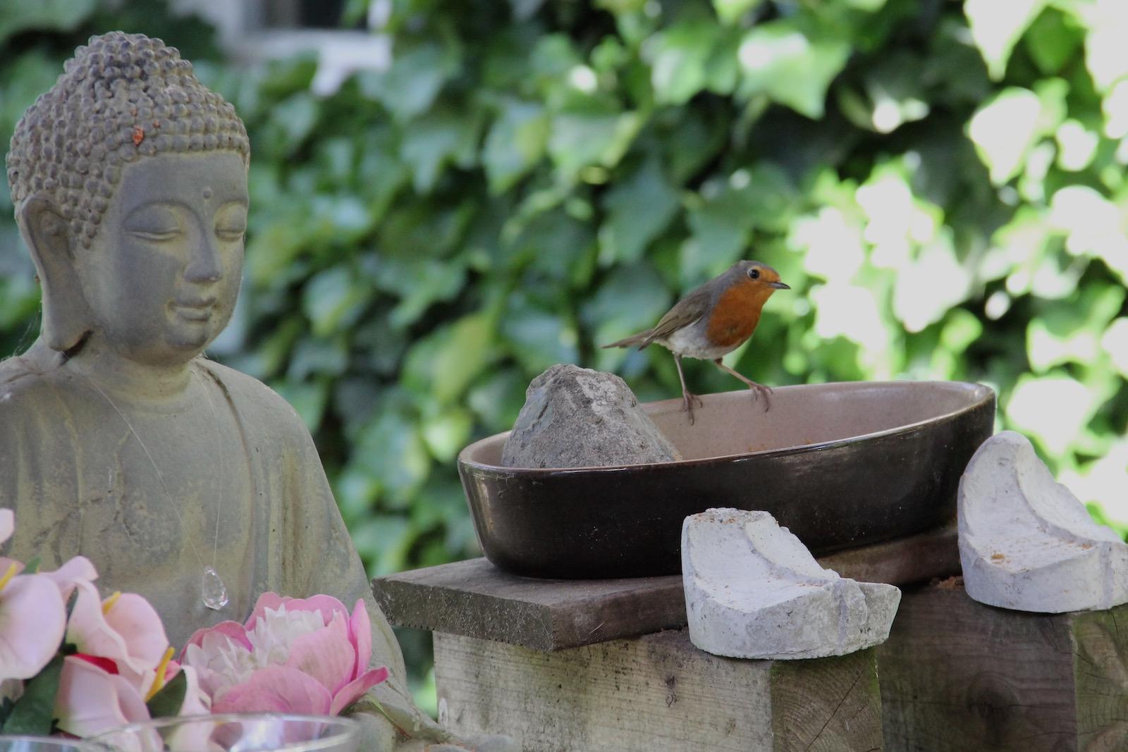Buddha-Statue und ein Rotkehlchen