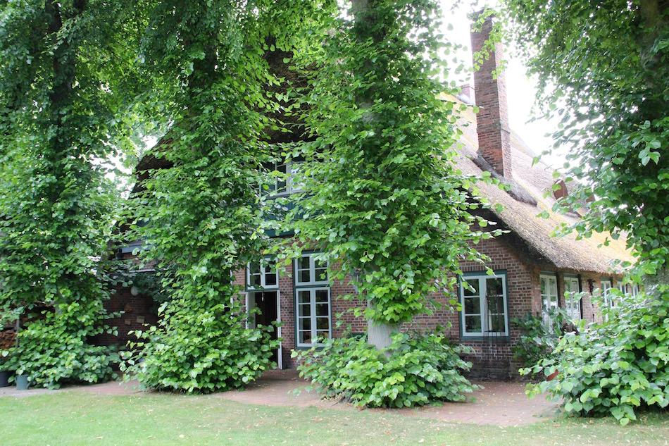 Linden verdecken ein altes Bauernhaus