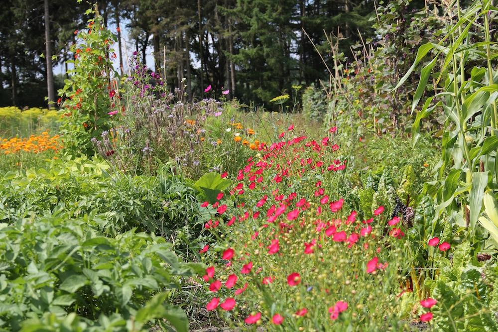 Beetstreifen mit rotem Lein inmitten von Gemüse