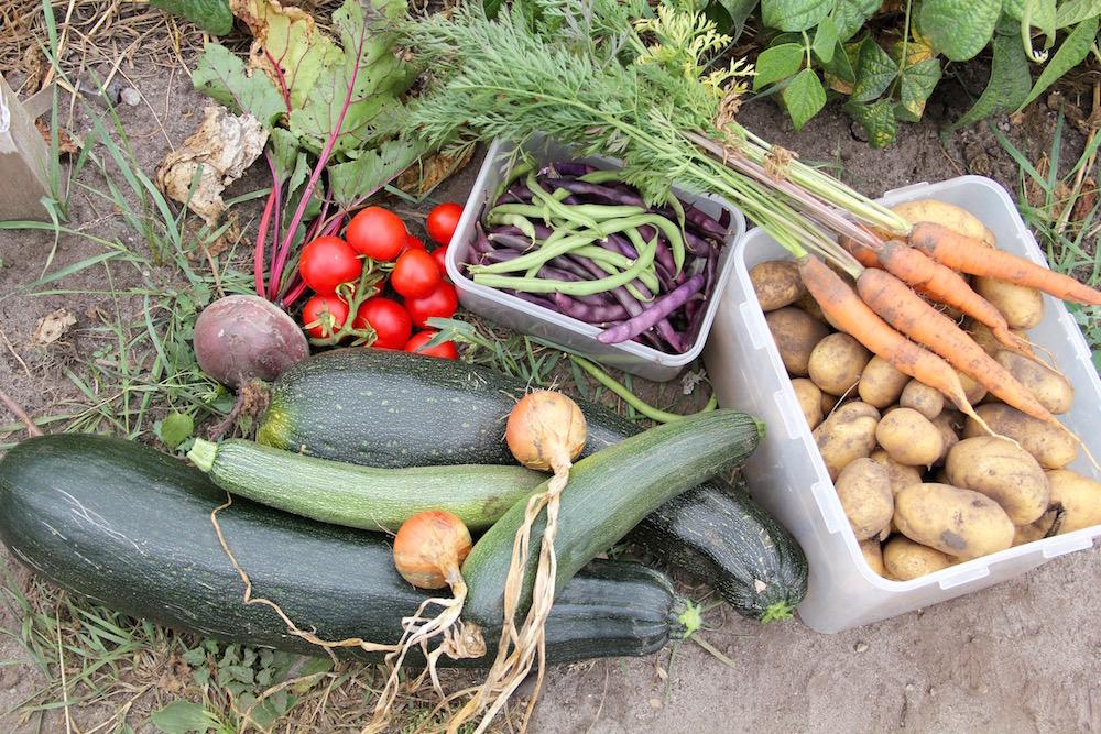 Kartoffeln, Zucchini und anderes Gemüse auf dem Boden