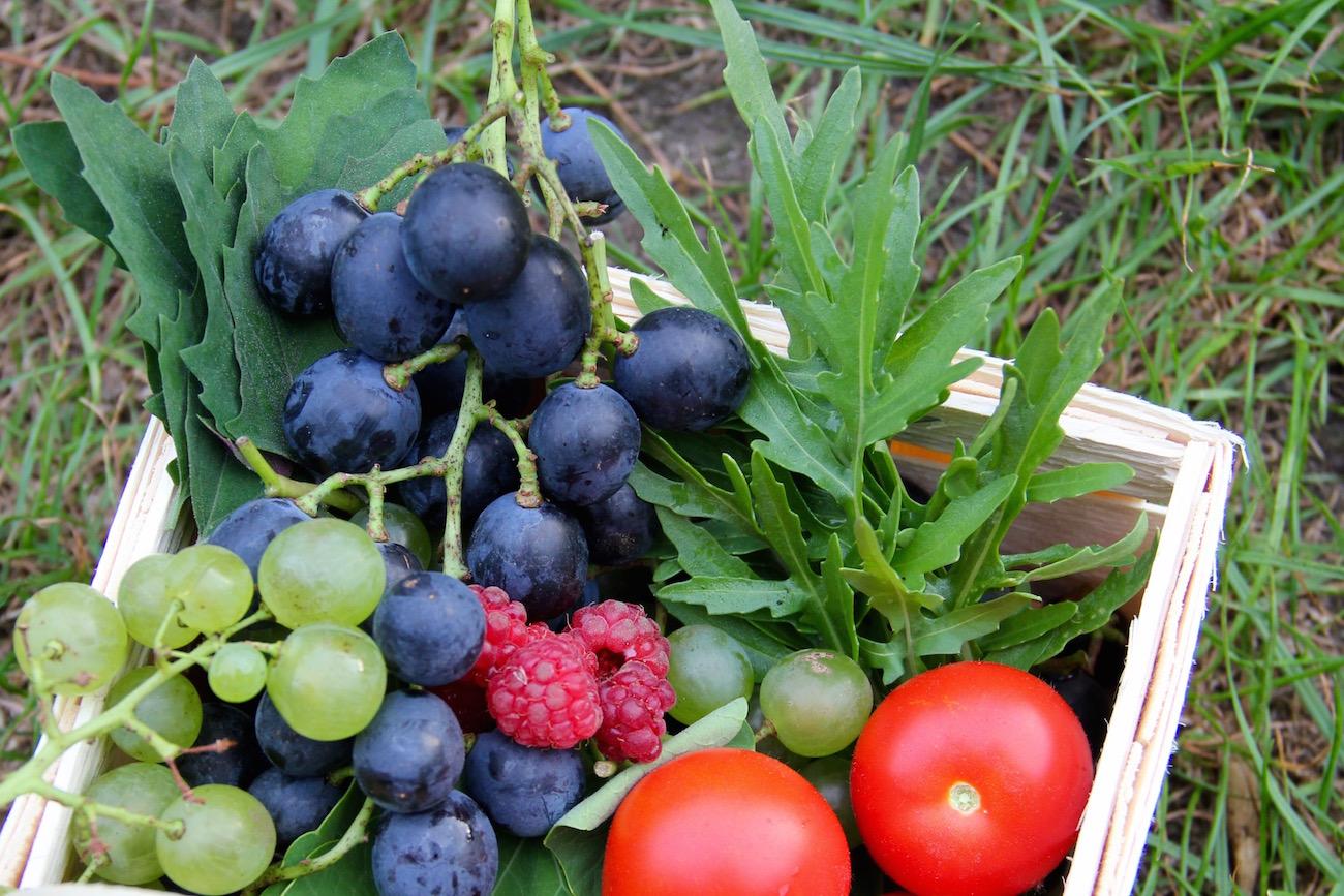 Erntekorb mit Weintrauben, Tomaten und Salaten