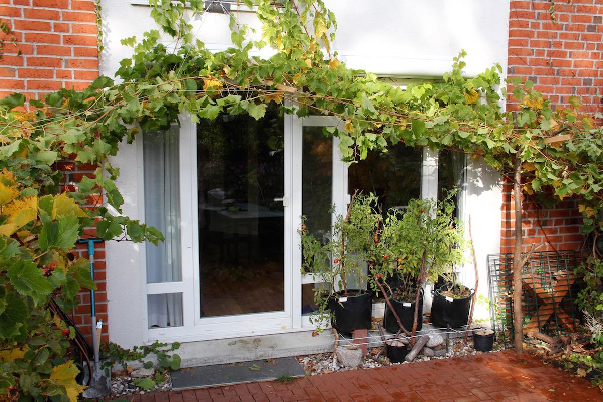 ein Blätterdach überspannt die Terrasse von links nach rechts