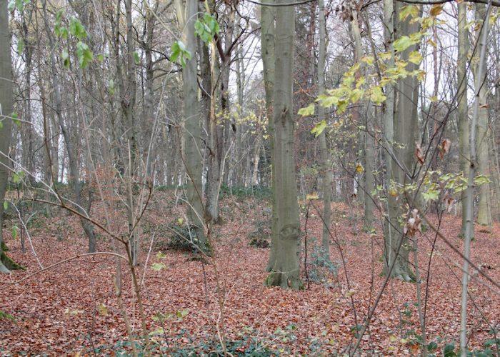 Blick in den herbstlichen Wald