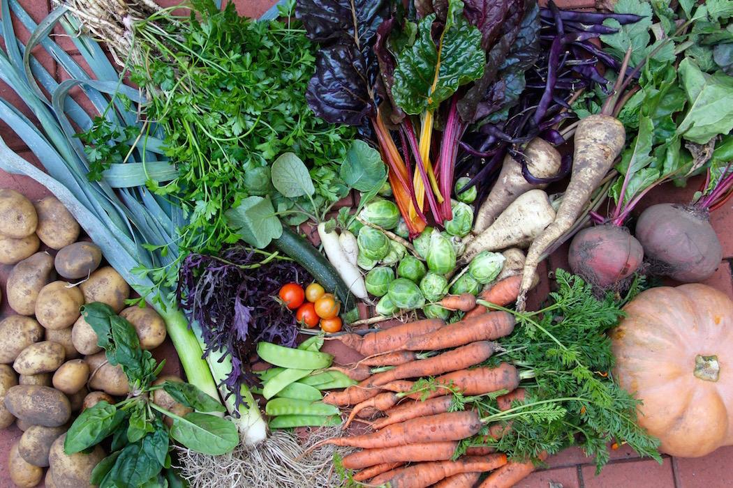 Ganz viel Gemüse: Möhren, Kürbis, Porree, Rosenkohl, Pastinake, Mangold usw.