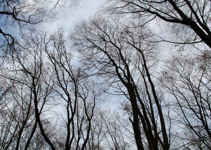 Blick nach oben in lauter kahle Bäume