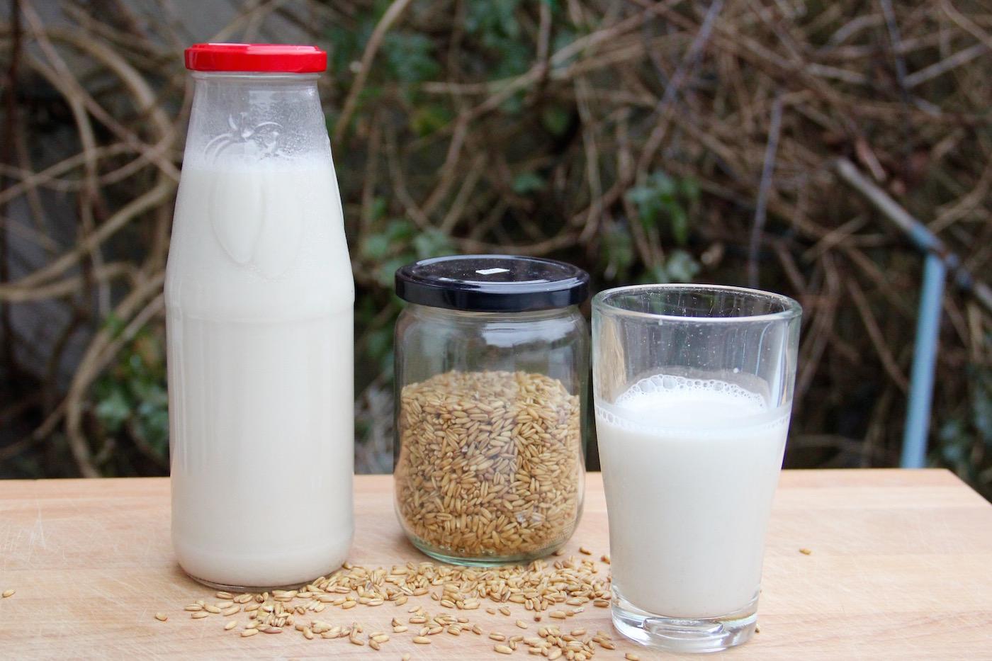 selbst hergestellte Hafermilch in einer Flasche, ein Glas voll Hafermilch und Haferkörner in einem weiteren Glas