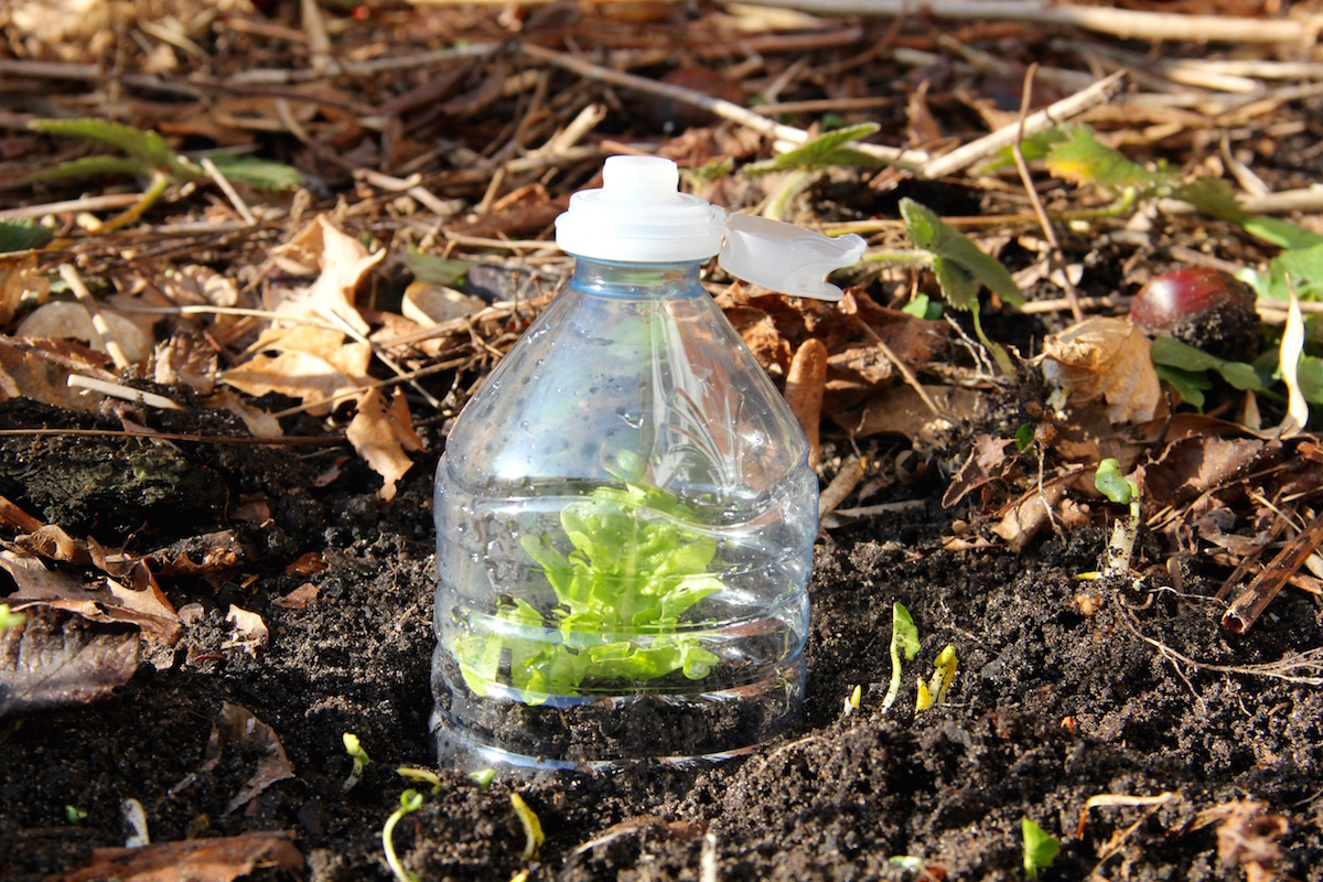 abgeschnittene PET-Flasche auf Salat