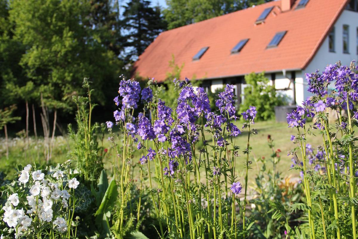 Blumenhochbeet vor Haus