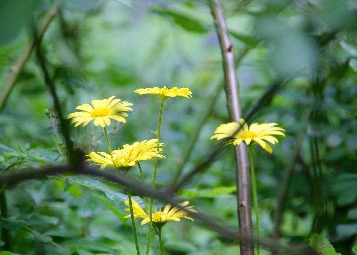 schöne gelbe Blume