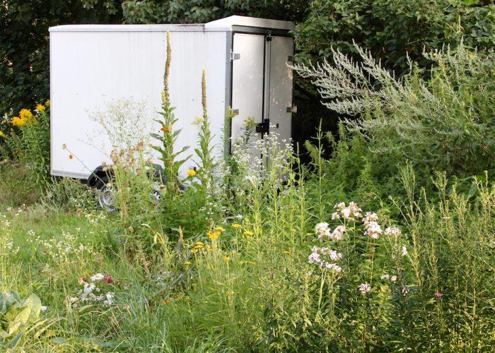 wildes Blumenbeet vor einem Containerwagen