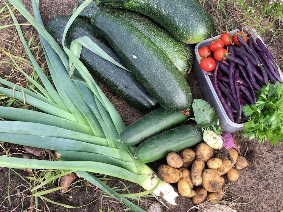 Riesige Zucchini, Lauch, Bohnn, Tomaten, Gurken, Kartoffeln und Petersilie