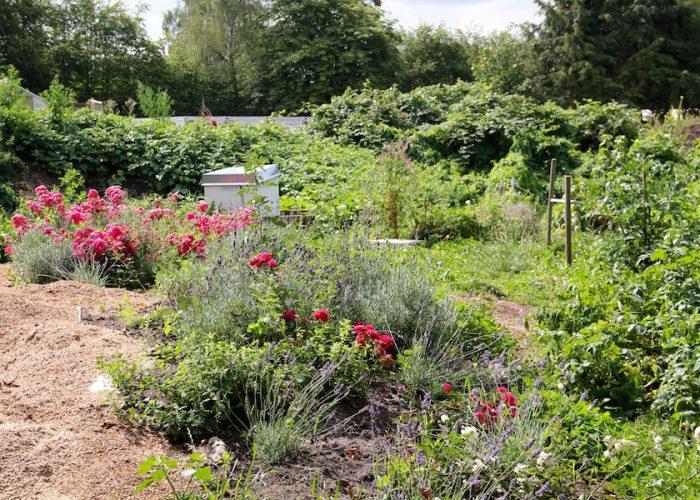 Rosen und Lavendel neben dem Gemüse