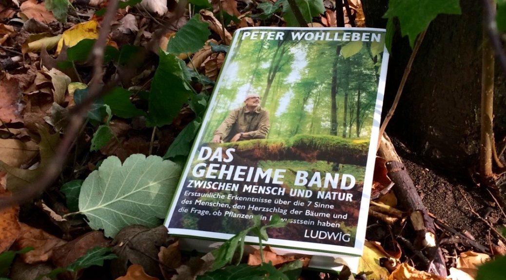 """Buch """"Das geheime Band zwischen Mensch und Natur"""" von Peter Wohlleben auf dem Waldboden"""