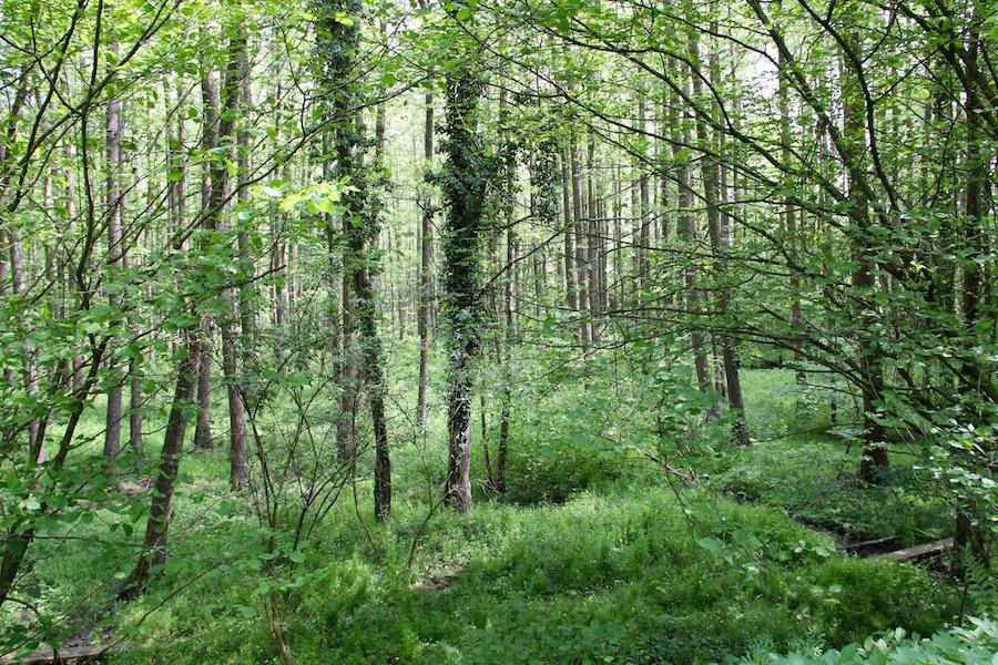 Frühlingsgrüner Feuchtwald