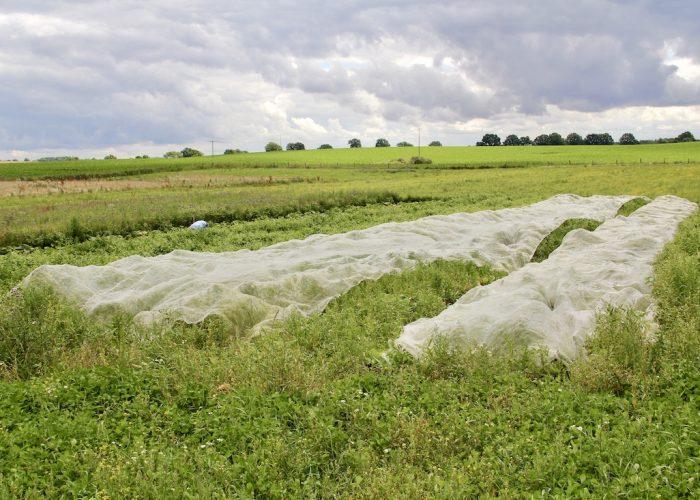 Kohlfeld überdeckt mit Schutznetzen