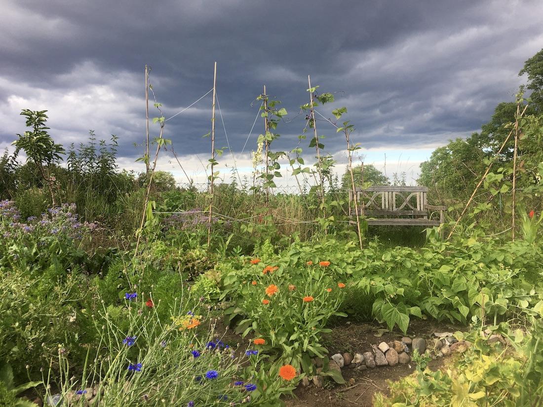Dramatisch hell-dunkler Himmel über seltsam beleuchtetem Garten