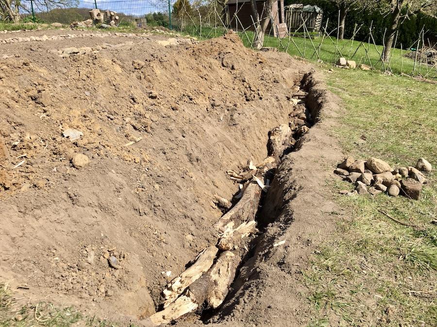 Baumwurzeln, die in einem Graben liegen