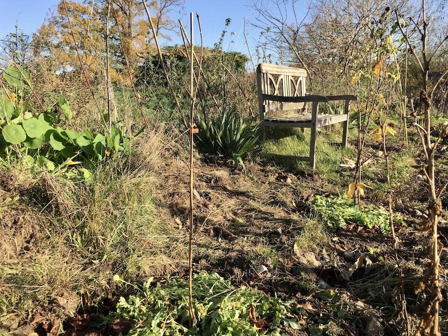 Kornelkirsche Jolico frisch gepflanzt